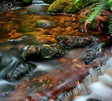 """Little Forester River"" by Husky"