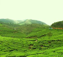 Munnar in its greenery... by sureshkr2007