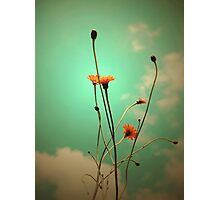 Vintage Weeds Photographic Print