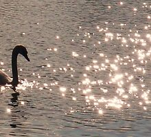 Sparkling Swan - Chelmsford by MichelleRees