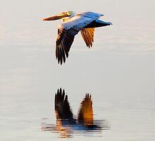 Reflecting Flight by Janet Fikar