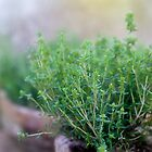 Thyme in a clay pot by Linn Arvidsson