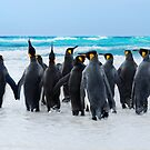 King Penguins by Ben Goode