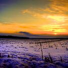 Cornfield Sunset - HDR by Trenton Purdy