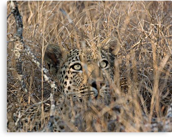 I Can See You, But You Can't See Me by Michael  Moss