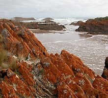 Red Lichen on Rocks, Arthur River, Tasmania, Australia. by kaysharp