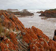 Red Lichen on Rocks, Arthur River, Tasmania, Australia. by kaysharp