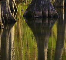 Swamp Reflections by JKKimball