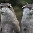 Compare the otters, dot com. by ellismorleyphto