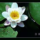 lotus-bling*** by LisaBeth