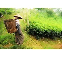 One Day In Tea Plantation Photographic Print
