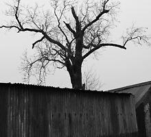 dark barn  by bertie weal