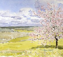 Cherry Blossom in the Dordogne by ian osborne