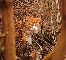 Cat Prowls through Miniature Jungle by DavidBrainbow