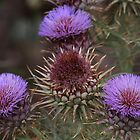 A noxious weed - surely not!!  by R-Summers