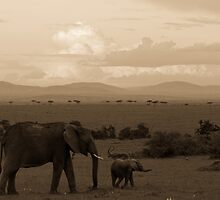 elephant walk by Dan A'Vard