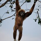 Gibbon by nicholaspr