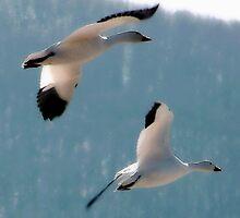 Snow Geese Buddies by Judi Taylor