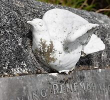 Old Gravestone with  A White Pigeon by yurix