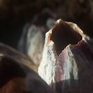 Barnacle Shell by SueGPhotography