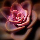 Cactus Rose by Eugenio