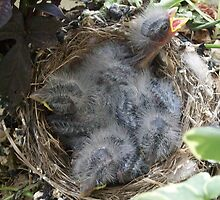 Babies in the nest. (In one of my planters) by wildworld78