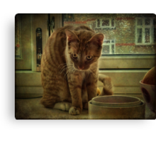 Nature of the Cat Canvas Print