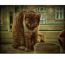 Nature of the Cat Photographic Print