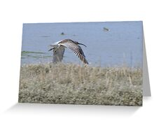 Curlew 04 Greeting Card