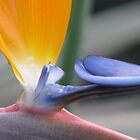 BIRD OF PARADISE by Khaled EL Tangeer