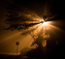 Street Lights on Mt. Tamalpais by Thomas Lawn