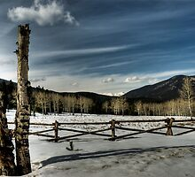What's behind the fence?? by Kasey Cline