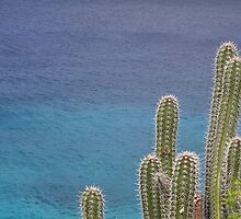 Cactus Over the Ocean by GusJoseph