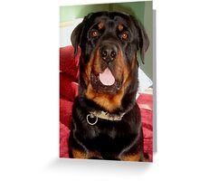 Head and Shoulders (Rottweiler Portrait) Greeting Card