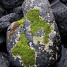 Moss Rock - south of Melbourne, Victoria. by emilykperkin