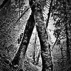 tree hugging by Bruce  Dickson