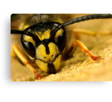 Jasper wasp up close and personal Canvas Print