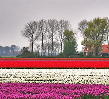 Colors of Spring 11 by Adri  Padmos