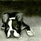 Boston Terrier by Loewin