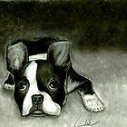 Boston Terrier by Loewin