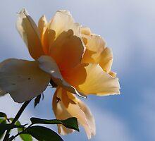Rosey Sky by Brian Edworthy