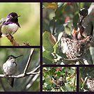 Costa's Hummingbird ~ Family Portrait by Kimberly Chadwick