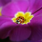 Lady bug & primrose by SKNickel