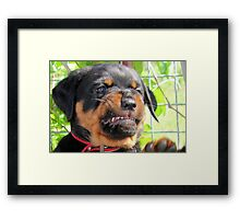 P.M.S. aka Puppy Makes Snarl Framed Print