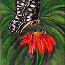 Butterfly by Dawn B Davies-McIninch