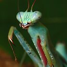 cleane clean clean (adult male jade mantis cleaning) by Scott Thompson