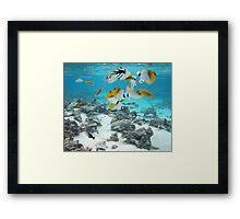 Cook Islands fish spectacular Framed Print