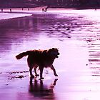 saz walking across the beach by xxnatbxx