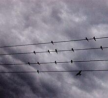birdsong by Naia