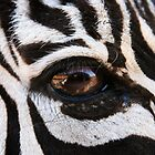 Zebra Eye by Susan Russell